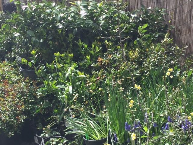landscape ornamental plants
