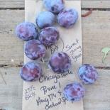 Hootie's Purple plum